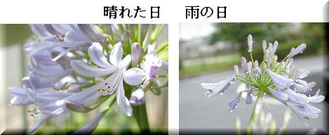 f0007689_7205936.jpg