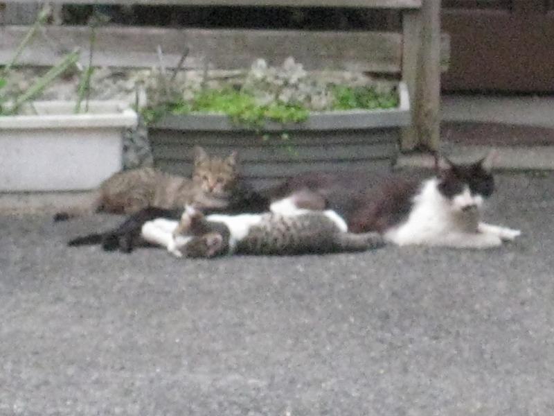 CATS_c0083911_2042859.jpg