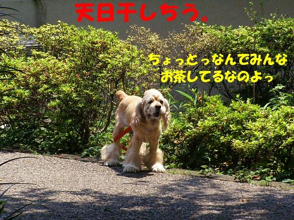 b0067012_18403689.jpg