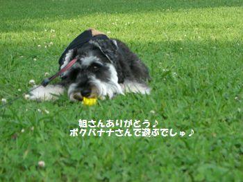 f0197317_1434465.jpg
