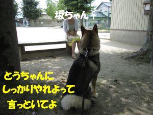 f0143123_1523965.jpg