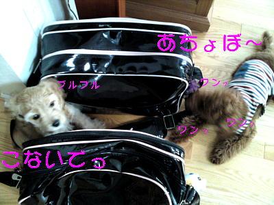 b0176428_11445870.jpg