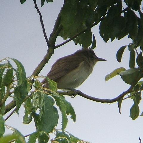6月21日の谷津干潟(外で見かけた鳥)_e0089232_2032482.jpg