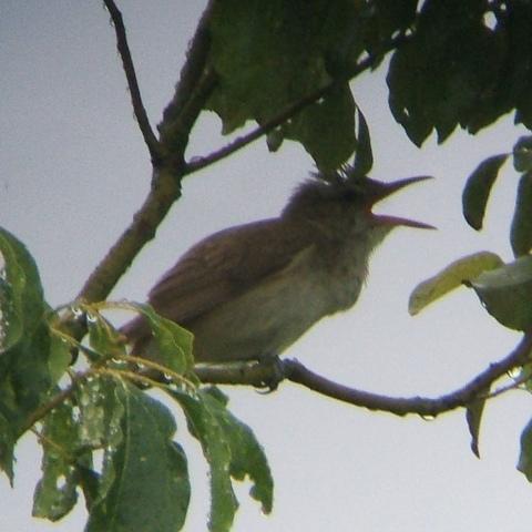 6月21日の谷津干潟(外で見かけた鳥)_e0089232_20325792.jpg