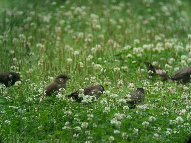 6月21日の谷津干潟(外で見かけた鳥)_e0089232_2033512.jpg