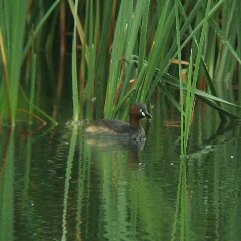 6月21日の谷津干潟(外で見かけた鳥)_e0089232_20363992.jpg