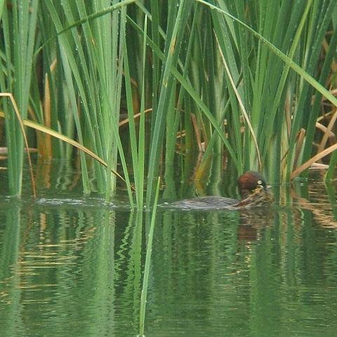 6月21日の谷津干潟(外で見かけた鳥)_e0089232_20365652.jpg