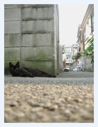 黒猫ミンク 立ちどまる_b0189039_1433229.jpg