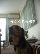 b0098660_2013185.jpg