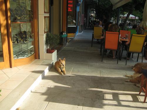 飼主と喫茶店にいたかわいいワンちゃん_f0037264_1574885.jpg