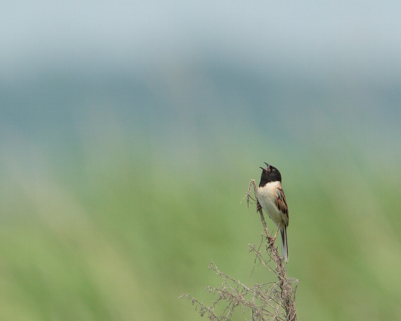 笹川は野鳥カメラマンに優しい土地です!_f0105570_22561971.jpg