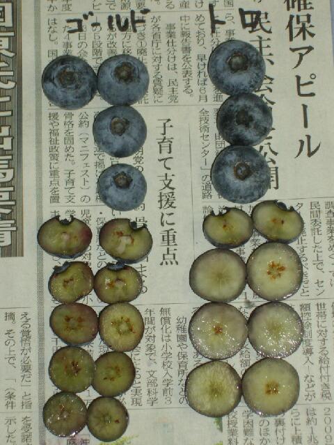 トロとブルーゴールド果肉の色の記録記事_f0018078_15431578.jpg
