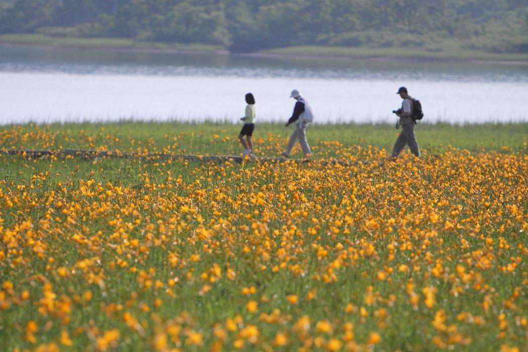 雄国沼のニッコウキスゲ 喜多方市 2009年6月27日_e0143883_17421250.jpg