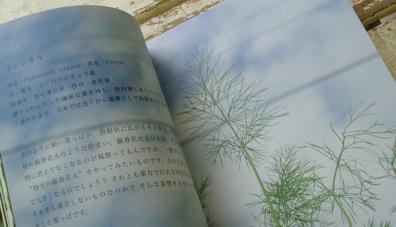 葉っぱカタログ_d0104091_16592831.jpg