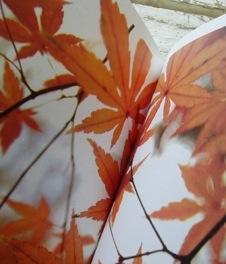 葉っぱカタログ_d0104091_16594859.jpg