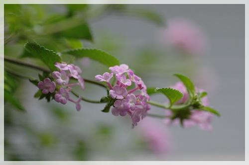 桜姫の観劇_c0051105_1234123.jpg