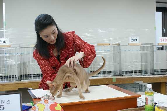 TICA ECC CAT SHOW~ブルースリー君 1_e0033609_20112942.jpg