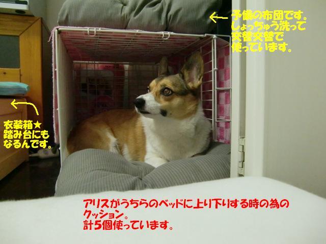 f0182121_1382428.jpg