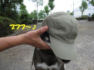 f0143123_20362933.jpg