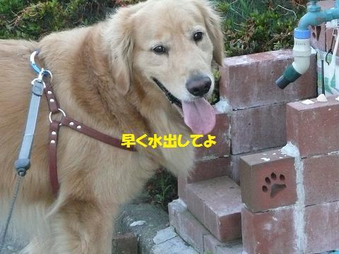 f0114128_20343969.jpg