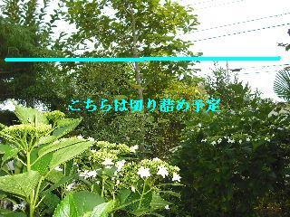 f0031037_20251928.jpg