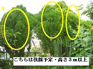f0031037_2025768.jpg