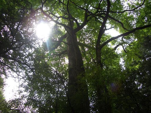 桂の樹と・・・_c0085539_18175568.jpg