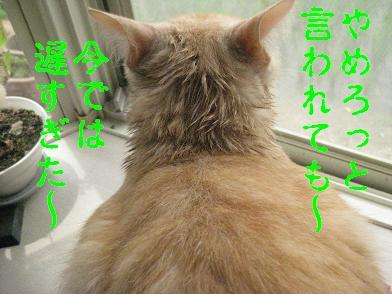 b0151748_20505621.jpg