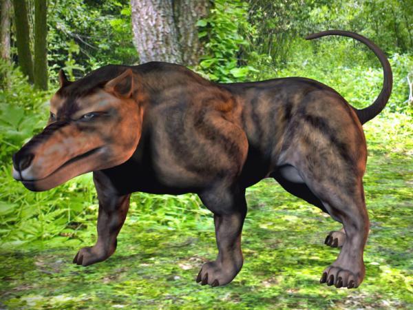 史上最大の陸生肉食獣アンドリューサルクス_b0052564_17212878.jpg