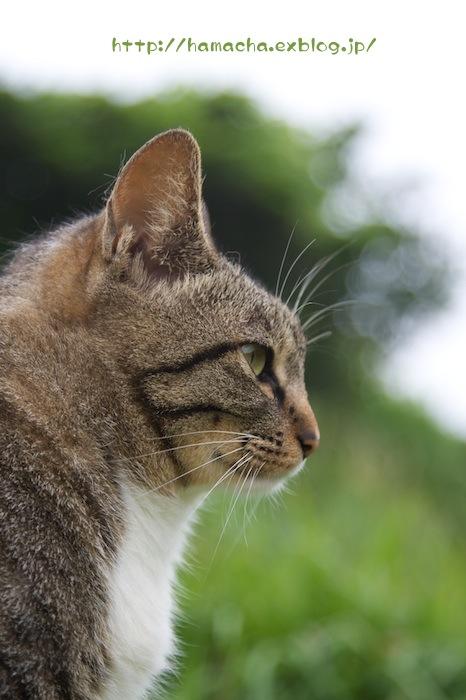Cats in Shonan #32_c0158775_1643078.jpg