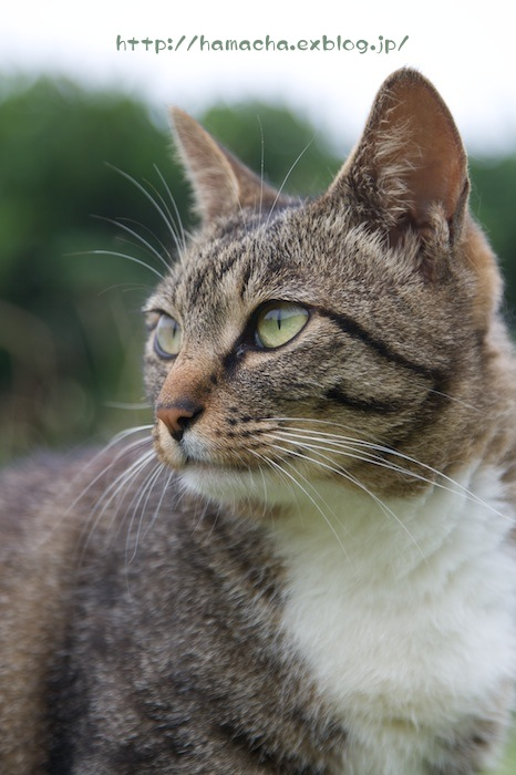 Cats in Shonan #32_c0158775_16431760.jpg