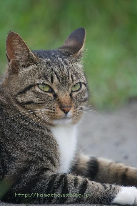 Cats in Shonan #32_c0158775_164330100.jpg