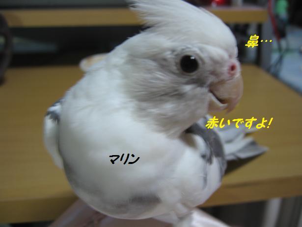e0027078_10132456.jpg