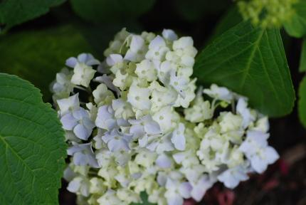 カバン持ち、6月下旬の庭便り。_d0129786_1513750.jpg