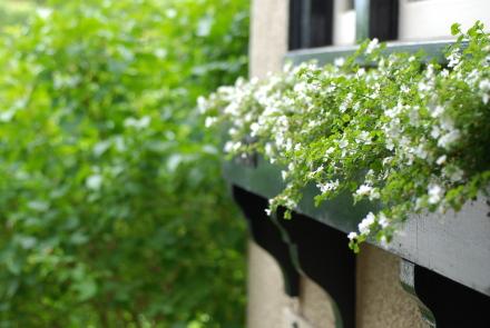 カバン持ち、6月下旬の庭便り。_d0129786_1613499.jpg