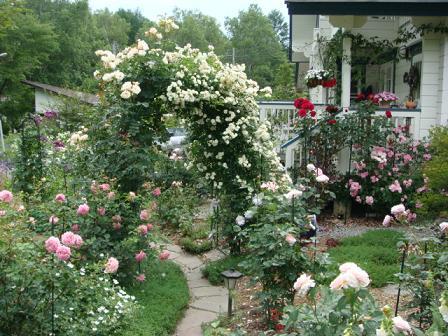 まだまだバラの花園_f0064906_1831228.jpg