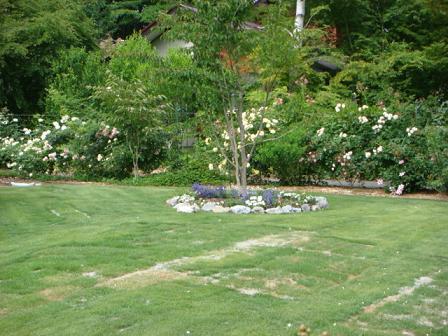 まだまだバラの花園_f0064906_18343398.jpg