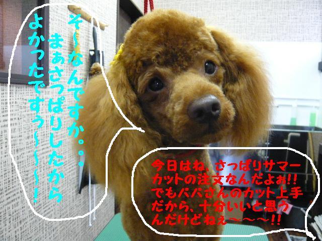 b0130018_19523439.jpg