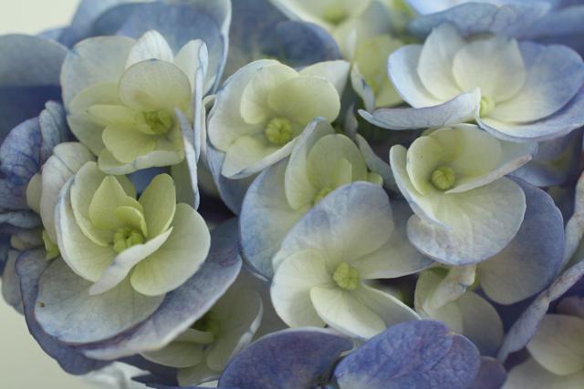 お花と笑顔は周りを幸せにしますね。_c0175022_23584944.jpg