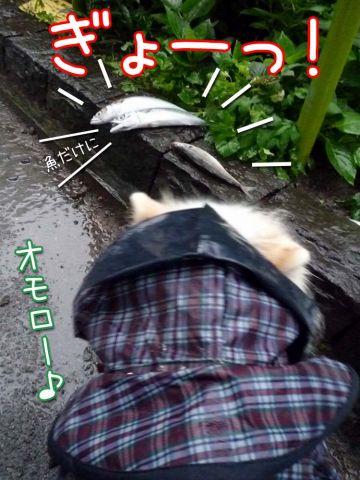雨のちアチチ_c0062832_17165129.jpg