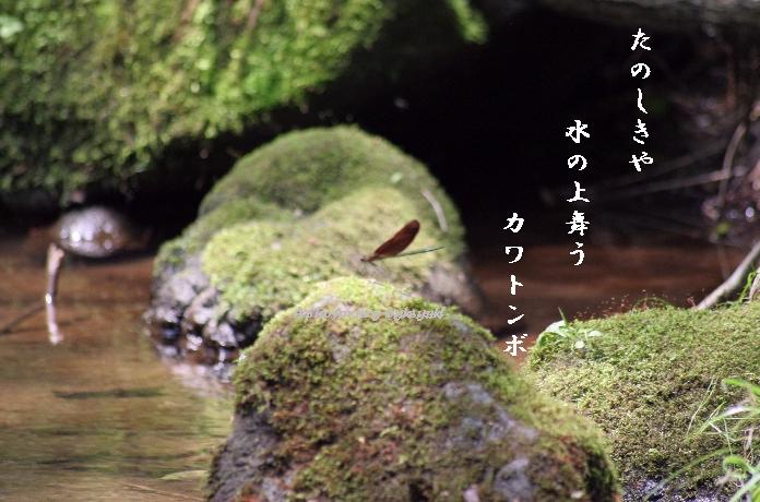 b0173244_1954734.jpg