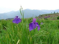 花と縄文巡りウォーク_f0019247_19464496.jpg