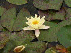 花と縄文巡りウォーク_f0019247_1947967.jpg