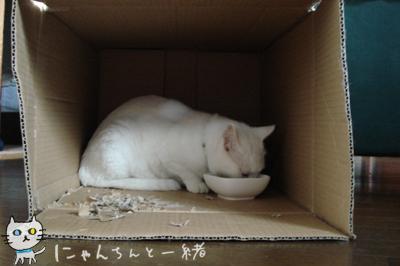 お食事処_e0031853_12491096.jpg
