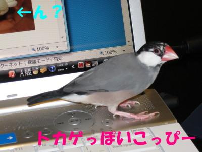 b0158061_216408.jpg