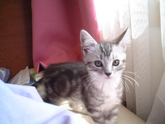 トムちゃん★  ネコ好きな方に♪_c0151965_18454623.jpg