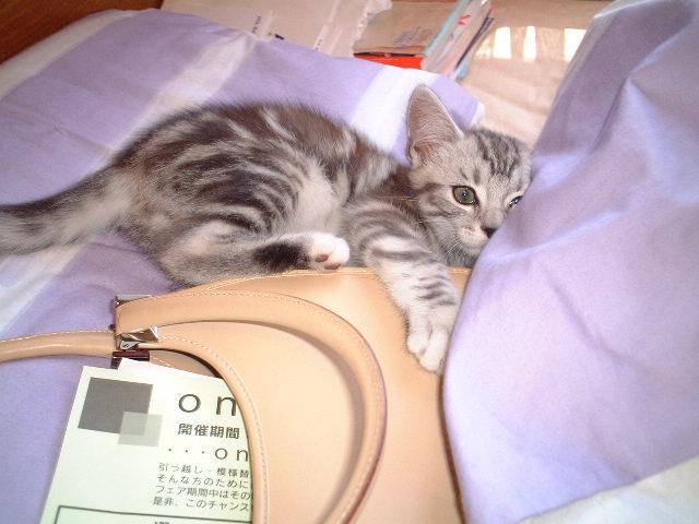 トムちゃん★  ネコ好きな方に♪_c0151965_1846352.jpg