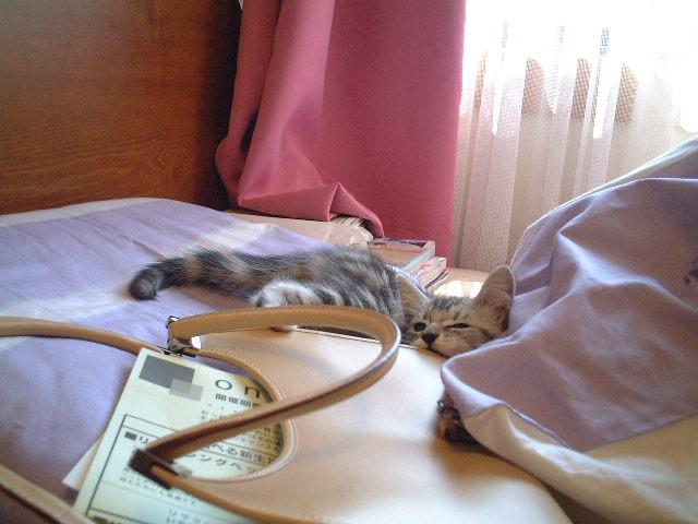 トムちゃん★  ネコ好きな方に♪_c0151965_18464789.jpg