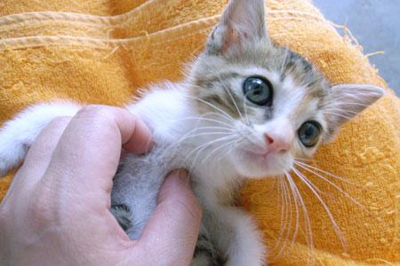 子猫と里子便り_a0064067_23233344.jpg