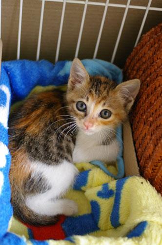 子猫と里子便り_a0064067_23243140.jpg